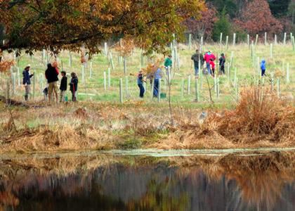 Bethesda-Chevy Chase Chapter Planting Trees