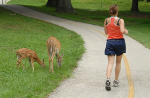 Deer and Runner on Trail_credit Joe Kosack PGC Photo