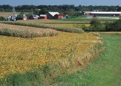 cover-crop-and-contour-farming_NRCS