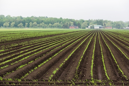 Crops Planted on Farm_credit iStock