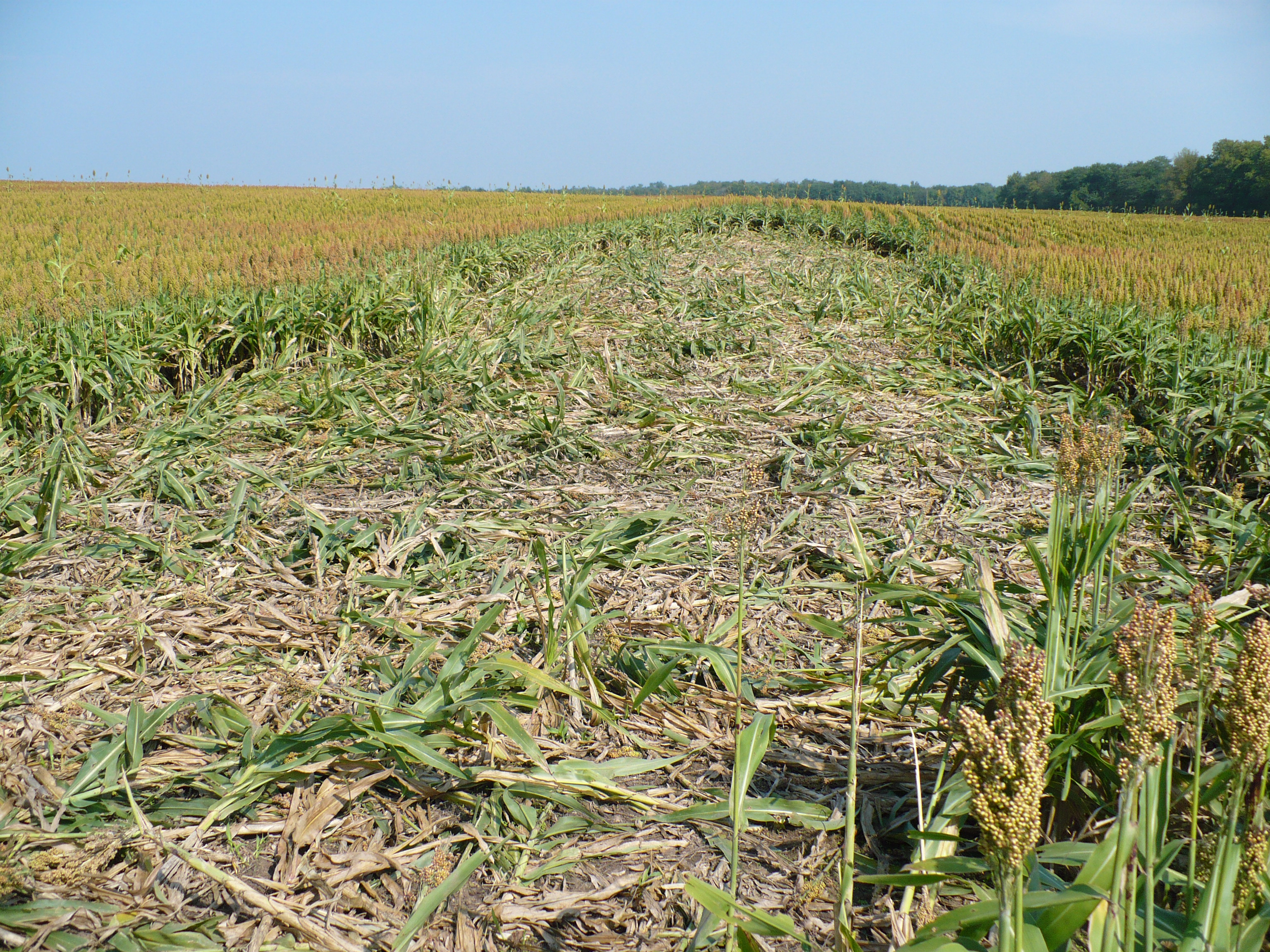 Damaged Crops_credit USDA