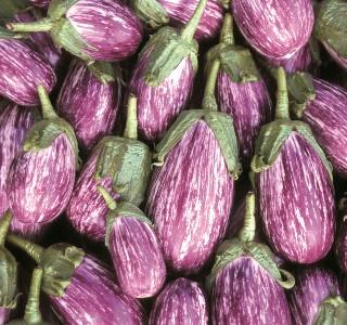 Eggplant Listada_Seed Savers Exchange