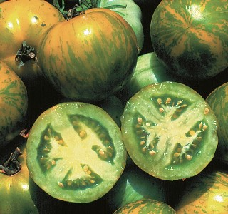 Green Zebra Tomatoes_Seed Savers Exchange