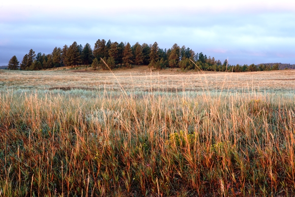 Prairie-iStock