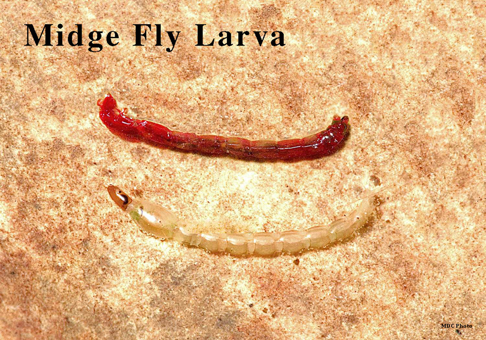 Midge Fly 1_Missouri Dept of Conservation