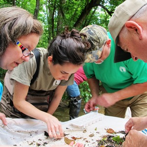 IWLA stream monitoring