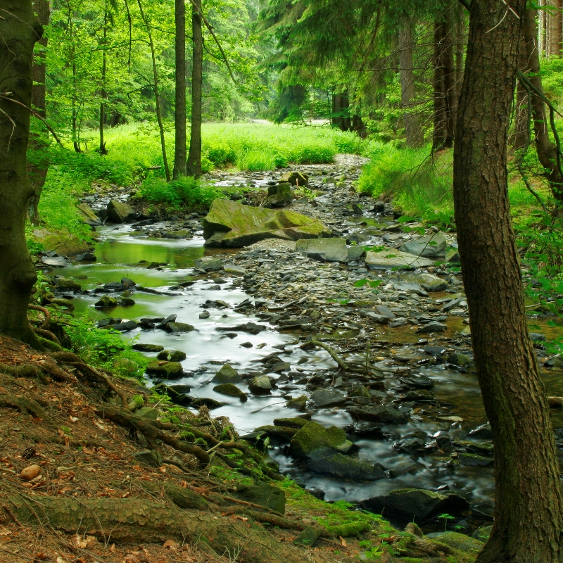 small forest stream_credit iStock