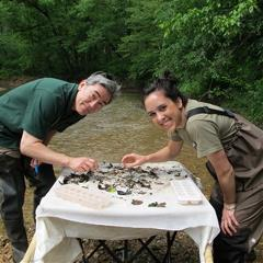 volunteers finding macroinvertebrates as part of measuring water quality
