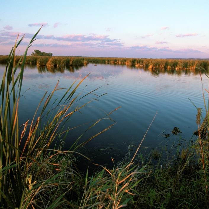 Wetland in Wisconsin