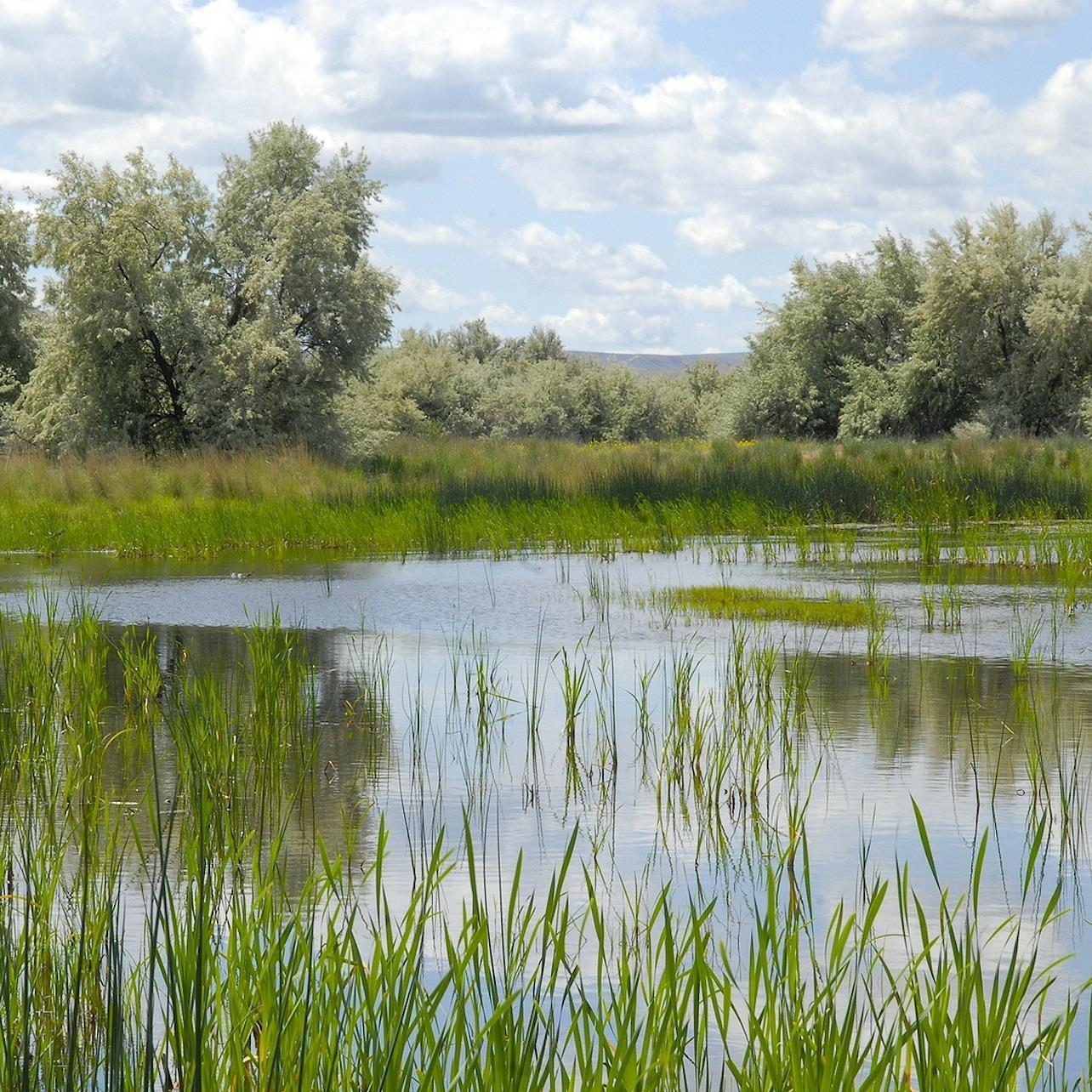 Wetland in Washington State - credit David Mark, Pixabay