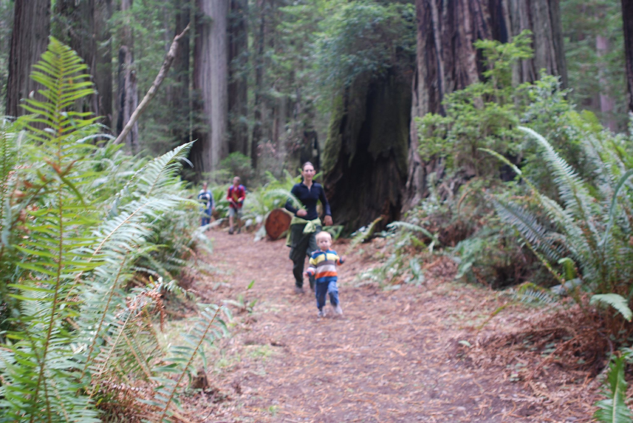 Redwood National Park_credit Redwood Coast
