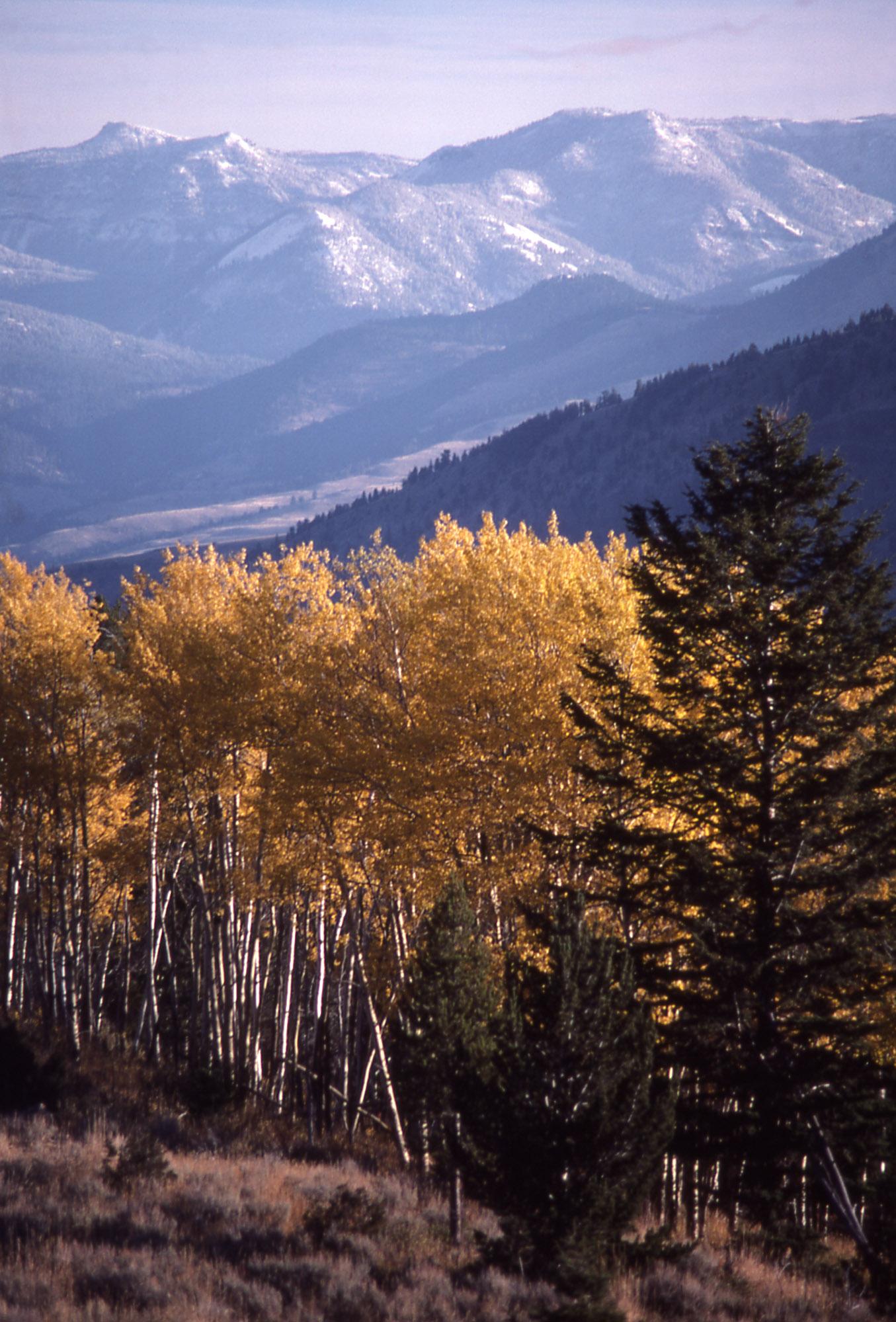 Yellowstone_credit NPS