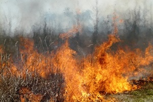 controlled burn_Patuxent Research Refuge MD_credit USFWS