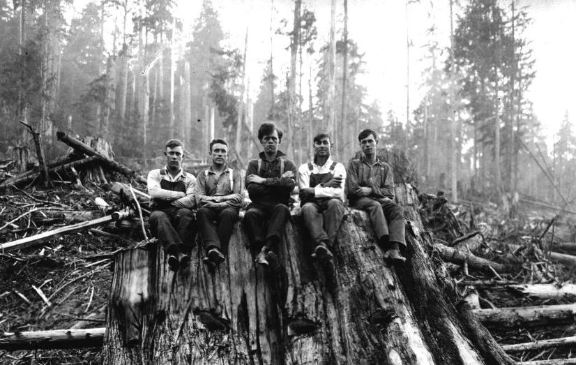 Loggers on a red cedar stump in Washington state, 1925. Photo credit: U.S. Forest Service