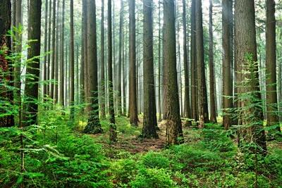 Trees_iStock