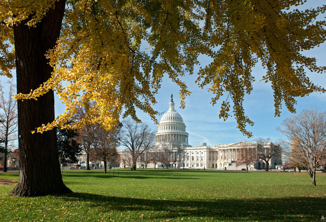 Capitol Dome framed by leaves