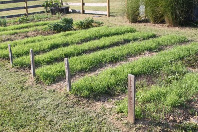 Cover crops in a garden