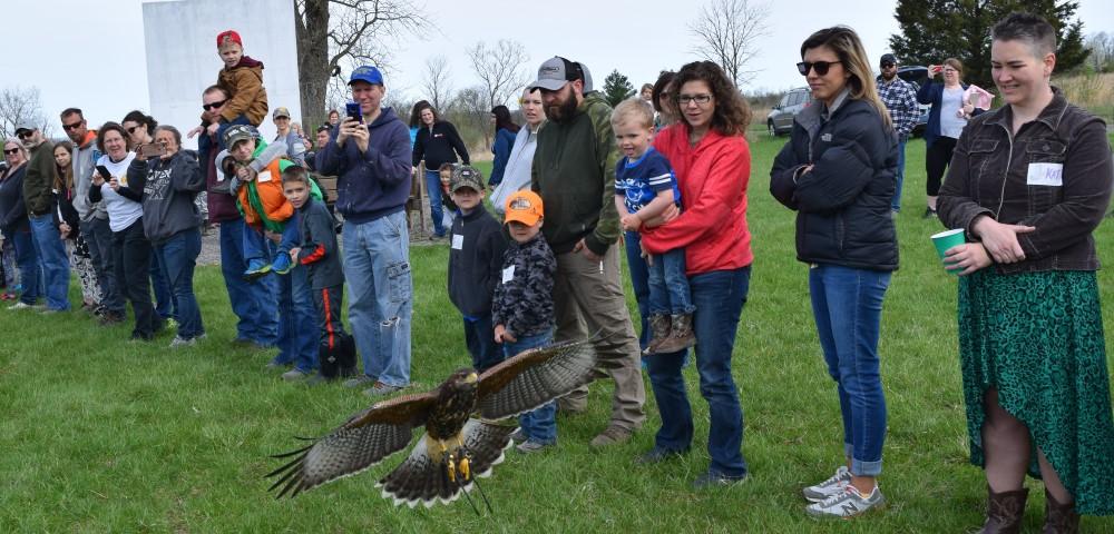 Hawk flying through crowd