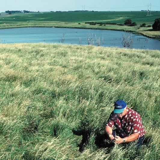 Conservation Reserve Program land in Iowa