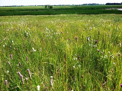 Prairie_credit EcoSun Prairie Farm