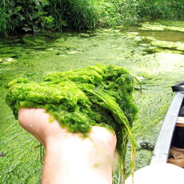 Handful of algae