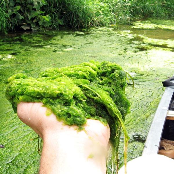 Handful of algae