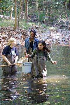Students collecting macroinvertebrates