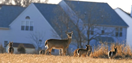 Photo courtesy of Joe Kosack, Pennsylvania Game Commission