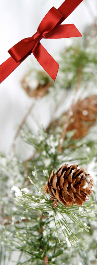 Pinecones and Ribbon_iStock
