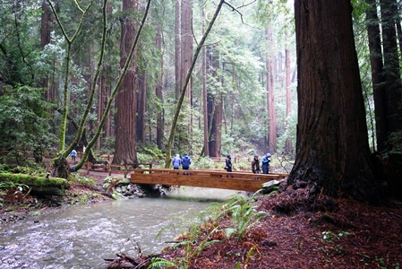 Muir Woods_credit Stephen Kennedy