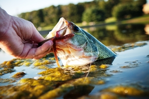 Fish on Hook_iStock