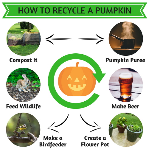 How to Recycle a Pumpkin_500x500