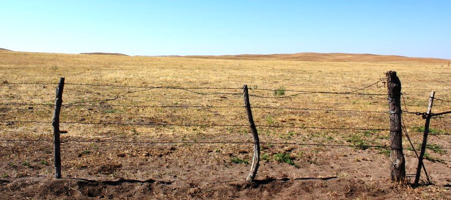 Drought Drovers Cattle Network