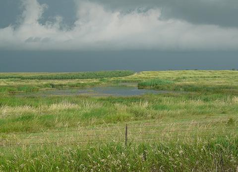 South Dakota Wetland