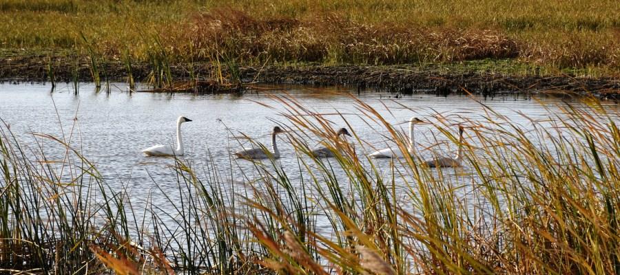 Wetlands_J Clark Salyer NWR_credit Colette Guariglia-USFWS