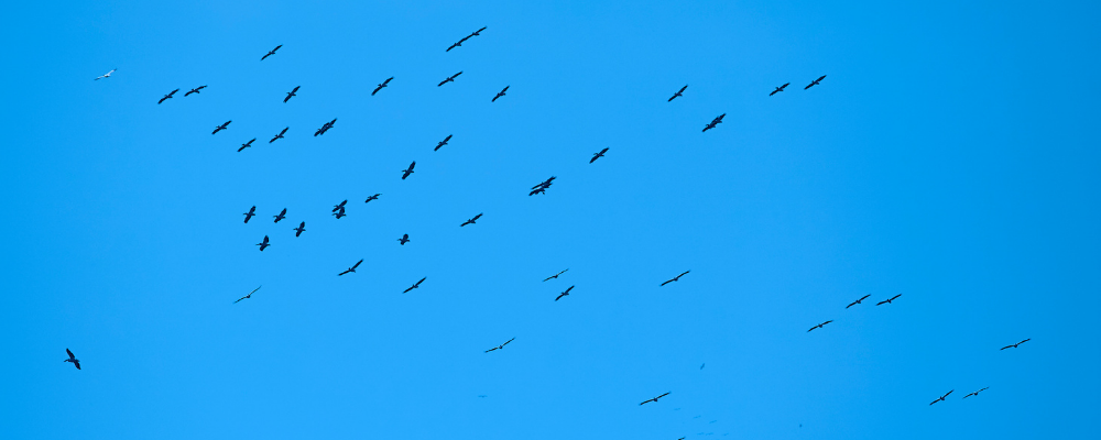 Birds migrating - credit Getty Images