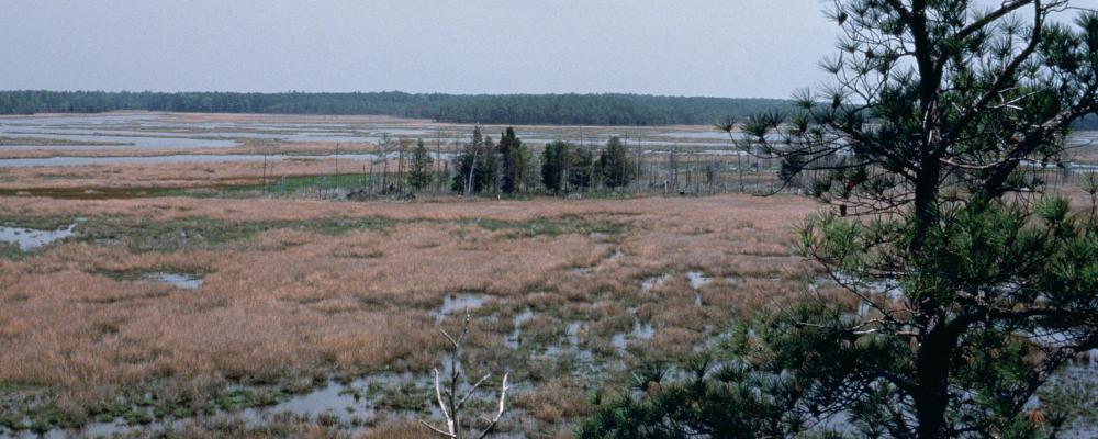 Chesapeake Bay wetlands - credit U.S. Fish & Wildlife Service