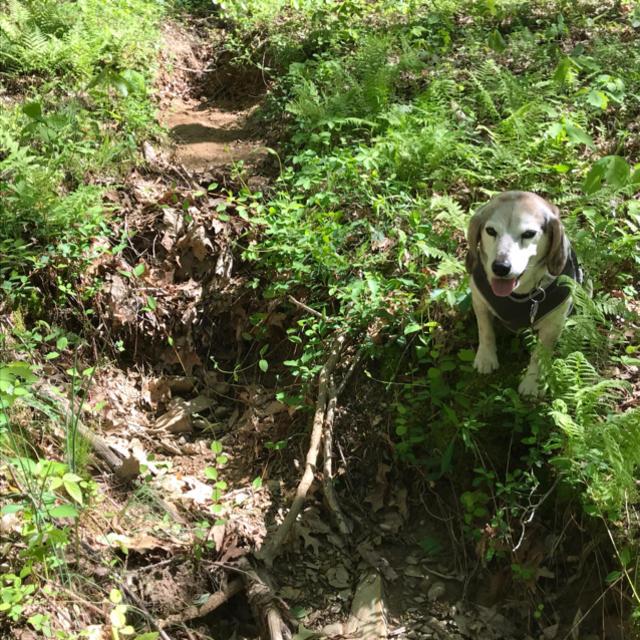 Dog sitting by dry streambed