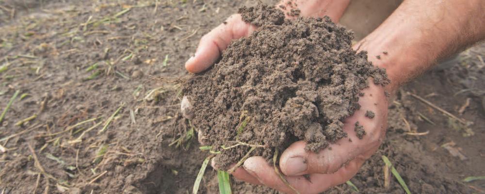 Soil - credit USDA