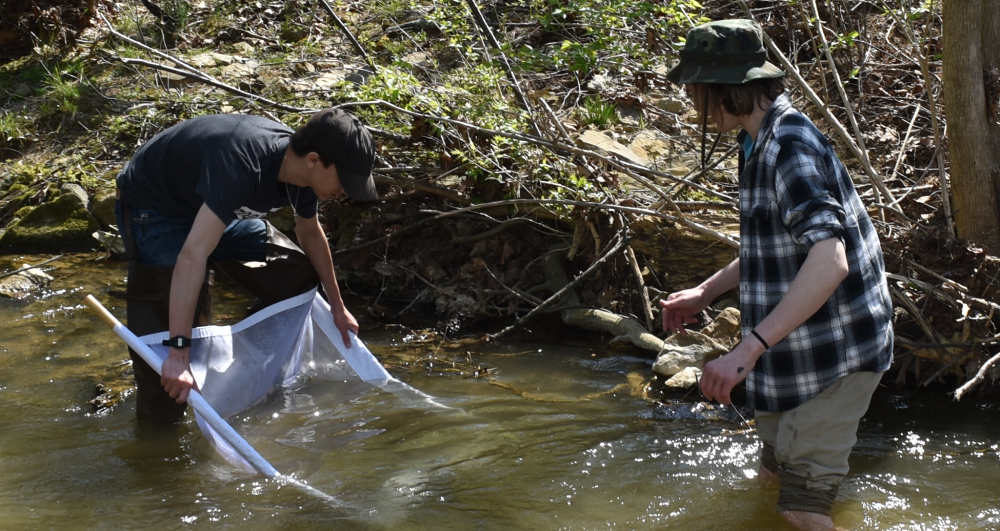 Students using a seine net