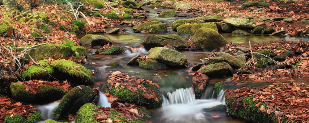 Tributary of the Susquehanna River - credit Nicholas A Tonelli