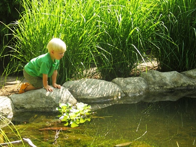 Boy Looking Into Water_credit Cleveland Botanical Gardens