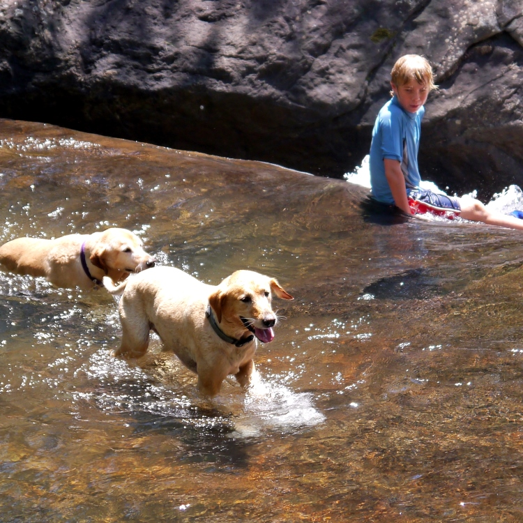 dogs and kid in creek_Chattahoochee Natl Forest_credit popofatticus